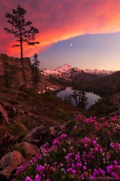 renamonkalou:  Drenched in Color |  Danny Seidman