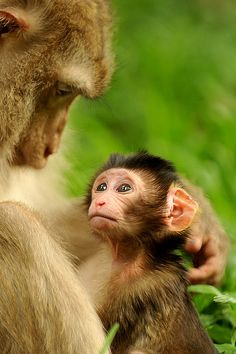 stay close my child Cute Funny Animals, Cute Baby Animals, Funny Monkeys, Nature Animals, Animals And Pets, Strange Animals, Beautiful Creatures, Animals Beautiful, Animal Pictures