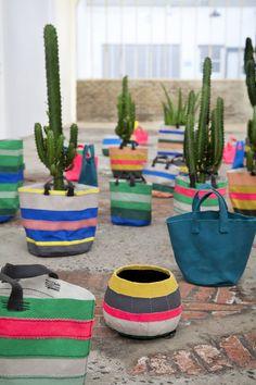 cactus planters