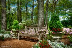 Dixon Gardens, this would be a great backyard reading spot.