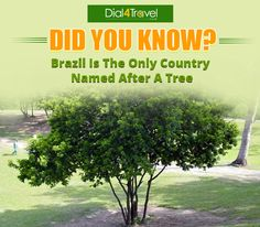 is named after tree because after Portuguese settlement on the land in were harvested for a red-coloured dye which was shipped for use in Europe. And they started calling the country 'Brazil'. Brazil Wood, Best Airfare Deals, Country Names, Portuguese, Did You Know, Europe, Red, Portuguese Language