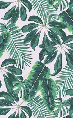 Tropical palm trees wallpaper Murals wallpaper - An atmospheric boho home office room with a real interior flair is inspired and created by these tr - Palm Tree Wallpaper Mural, Leaves Wallpaper Iphone, Whats Wallpaper, Plant Wallpaper, Tropical Wallpaper, Green Wallpaper, Cute Wallpaper Backgrounds, Pretty Wallpapers, Aesthetic Iphone Wallpaper