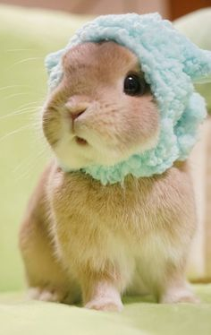 Adorable Bunny with a green knit hat