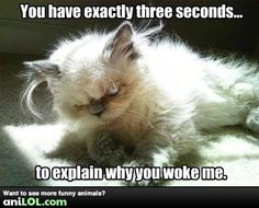 Funny animal pictures at Anilol