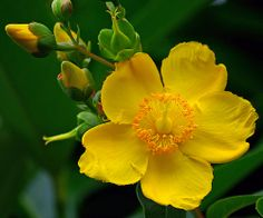 3-3961 Yellow flower taken in Le Havre France  鲜花 花 꽃
