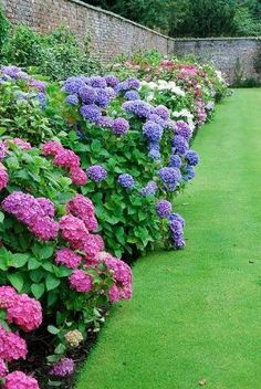 Lovely hydrangea border by mandy