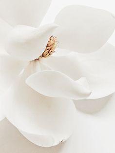 39 trendy flowers photography close up pictures Flower Aesthetic, White Aesthetic, White Flowers, Beautiful Flowers, Flowers Nature, Motif Art Deco, Magnolia Flower, Belle Photo, Color Inspiration