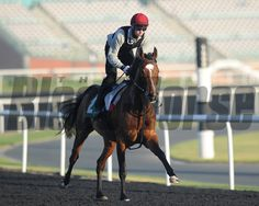 St Nicholas Abbey to Remain in Intensive Care Horse Profile, Sport Of Kings, Photo Store, Thoroughbred Horse, Horse Racing, Race Horses, Saint Nicholas, Horse Photos, Equestrian