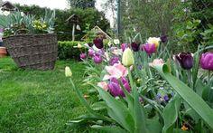 Květiny pro venkovskou zahradu vás nezklamou