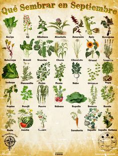 However, when you get a live wreath you may find some of them are going to be very. Garden Deco, Herb Garden, Vegetable Garden, Garden Plants, Planting Vegetables, Indoor Garden, House Plants, Organic Farming, Organic Gardening