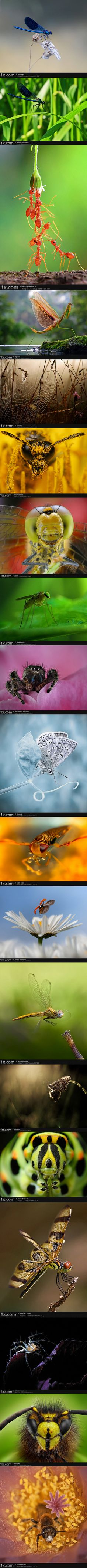 Love Macro pics!