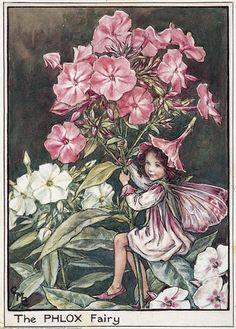 Illustration for the Phlox Fairy from Flower Fairies of the Garden. A girl fairy sits astride a phlox stem holding on with both hands.     Author / Illustrator  Cicely Mary Barker