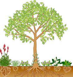 Bäume unterpflanzen Schattenstauden