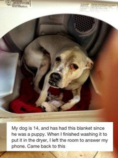 Blankie. THANKS TO ORIGINAL PINNER ,SO MEANINGFULL ,DOGS APPRECIATE  THE  SMALLEST GESTURE OF LOVE !!! I HAVE FOUND 6 DOGS HERE HOMELESS & ALL GREAT DOGS ,2 BRINDLE PITS ,& ALL JUST LOVE ANY BLANKET ON THE FLOOR OR GROUND & GO TO THEM RIGHT AWAY ,FOUNDLINGS JUST UNDERSTAND THE SMALLEST KINDNESS & KNOW WE CARE !! PLEASE SEE   DOGS THAT CHANGED THE WORLD ! NATURE , ON PBS & NEXT ,THE SECRET LIFE OF DOGS ,PBS