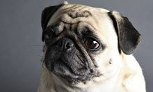 Your enemy's enemy is your dog, scientists find | Science | The Guardian