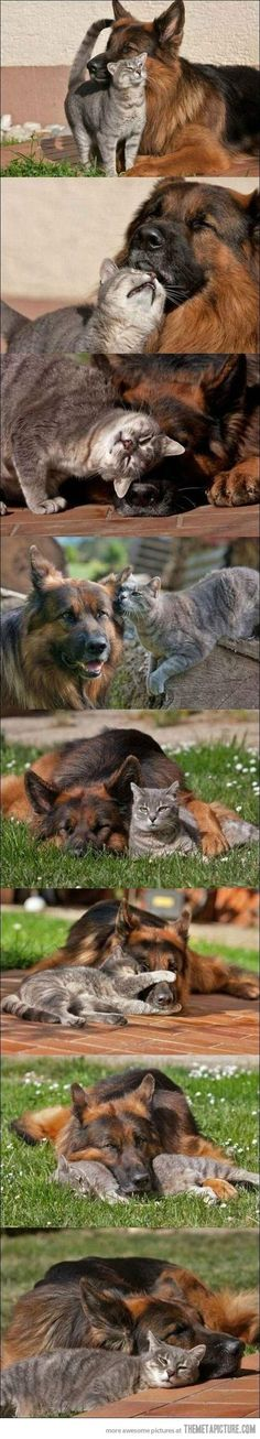 ♥ !  All of our cats and dogs have been Great friends. :-)