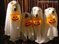 Perros disfrazados de Fantasma | Trato o truco