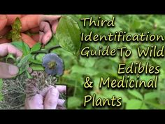 How To Identify Wild Edibles & Medicinal Plants - A Full Video Guide