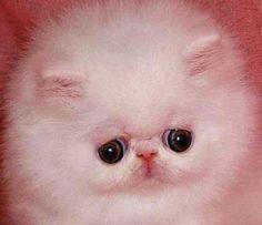 ネコ、顔面中央寄せ