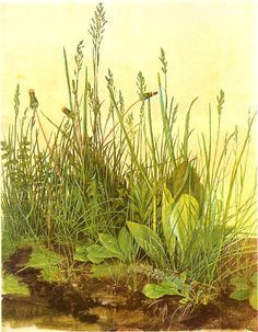"""""""The Large Piece of Turf"""" by Albrecht Durer"""
