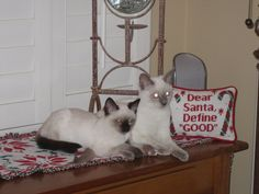 StormHaven's Baylor and Chase (they kept their cattery names) seem to be asking the correct question via the pillow for any Siamese kitten...