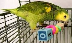 how to make bird toys for parrots - Google Search