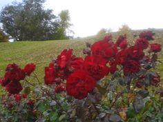 """Espiritualidad Contemporánea:                         """"aroma de rosas, presencia de Madre"""" fotografía y poema de Moni Indiveri de Vega"""