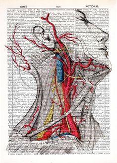 Vintage Anatomy Print Dictionary Art Print antique book art antique medical wall art human science illustration art prints no 132 by quiveringbeeprints on Etsy https://www.etsy.com/listing/510529398/vintage-anatomy-print-dictionary-art