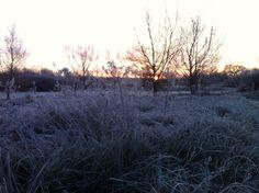 Lovely cold morning