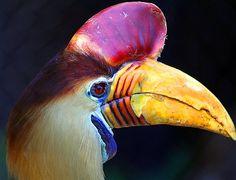 bird beak | Toucan Exotic Bird Beak | Flickr - Photo Sharing!