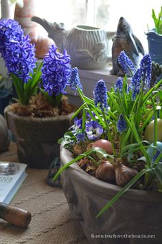 Purple Hyacinths and Muscari blooming, planted alongside violas, a bird nest, and a few colored eggs