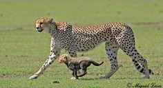 Los felinos | Animalesfera