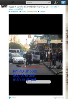 NYPD shoots dog of drunk man on street