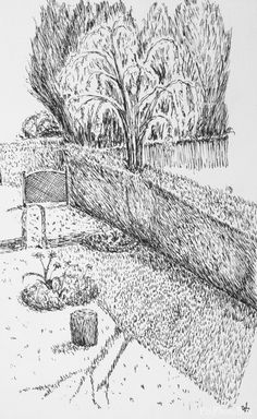 Ink drawing of my back garden.   Part of my daily drawing challenge.