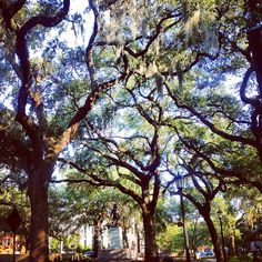 Aren't these trees lovely? Yes. Home sweet home. Savannah