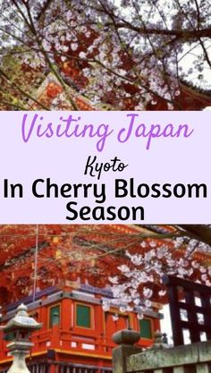 Visiting Kyoto Japan during Cherry Blossom Season. A quick guide and a beautiful photo diary. #Japan #Kyoto #cherryblossom #cherryblossoms #asia #travel #trip #vacation #travelblog #guide