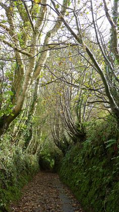 Holloways: Roads Tunneled into the Earth by Time | Atlas Obscura