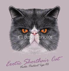 Вектор портрет Экзотическая короткошерстная кошка — стоковая иллюстрация #82673966