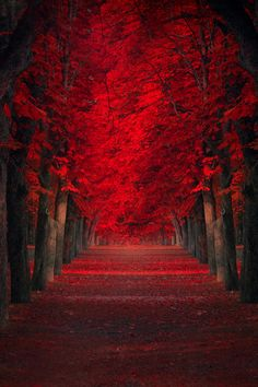 Endless Passion by Ildiko Neer, gorgeous color!