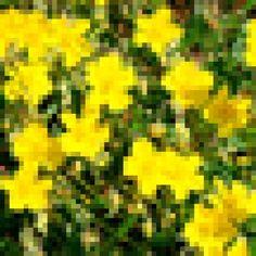 Um oráculo que ajuda no aprendizado dos Florais de Bach e no uso das essências para seu autoconhecimento. #ajuda #aprendizado #autoconhecimento #bach #conselho #conselho dos florais #das #dos #essencias #florais #oraculo #seu #uso