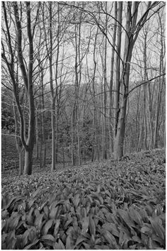 The River Lathkill tumbling over the weir, the waters attract the trout fishermen,but those trout are hard to spot with their camouflage. Wild Garlic, Primroses, Forest Floor, Landscape Photography, Ash, Monochrome, Places To Go, Flora, Lens