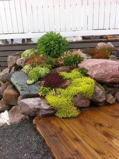 Beautiful rockery