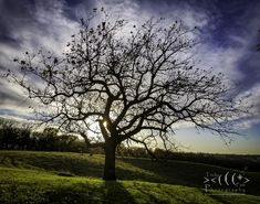 Iowa, Trees, Events, Fish, Celestial, Facebook, Photography, Outdoor, Art