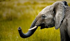 July 2014 Photo of the Month Desktop: Elephant - Photographer Robyn Gianni