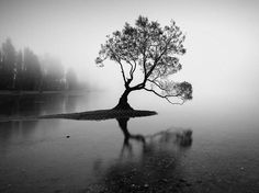 Lone Tree in a Lake Image, New Zealand - National Geographic Photo of the Day