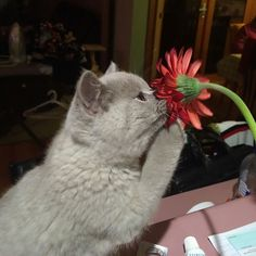 Rose, lilas, jasmin, clématite, glycine... Les fleurs ont un doux parfum très agréable pour l'odorat, et pas seulement pour les abeilles ! Les animaux aussi prennent plaisir à approcher leurs museaux de ces plantes aux fragrances délicates pourles renifler...