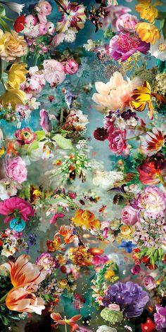 Wallpaper Nature Flowers, Flower Background Wallpaper, Beautiful Flowers Wallpapers, Beautiful Nature Wallpaper, Flower Backgrounds, Pretty Wallpapers, Wallpaper Backgrounds, Floral Wallpaper Iphone, Flowery Wallpaper