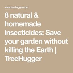 8 natural & homemade insecticides: Save your garden without killing the Earth Homemade Insecticide, Natural Garden, Save Yourself, Earth, Nature, Homemade Bug Spray, Naturaleza, Nature Illustration, Off Grid