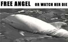 Tell Japan to Free Angel the Dolphin and Stop the Taiji Tragedies