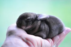 baby bunny in hand. (wish that was my hand!) look at the cute little wrinkles!